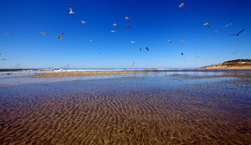 Torrey Pines State Beach Stock Photo